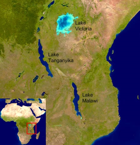 Lake Malawi Map Africa.Cichlids In The African Rift Lakes